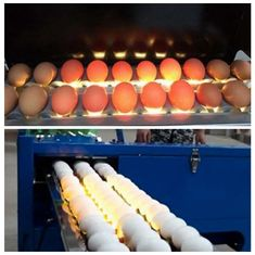 China Electric Egg Stamping Machine 600 DPI High Resolution With 1 - 4 Printing Lines supplier